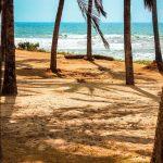 Na praia, entre os coqueiros. Foto: Laila Guedes